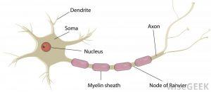 Axonal Neuropathy